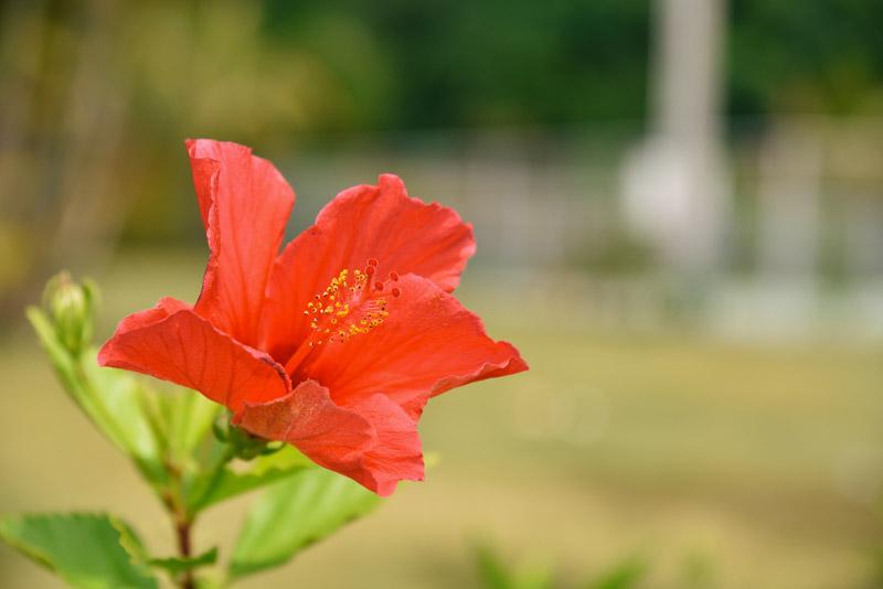花にぐっと近く